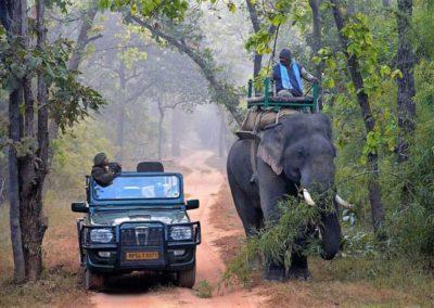 12. NWS SAMODE SAFARI ELEPHANT