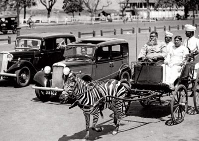 20. KOLKATA ZEBRA CART SHOT