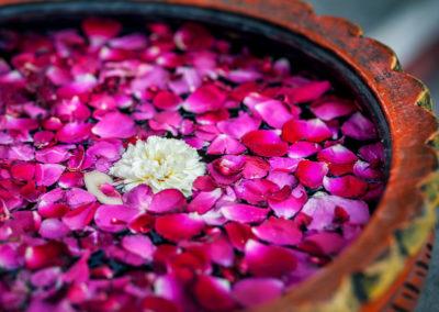 Flowers in SPA