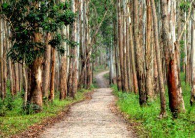 KOKOindia - Kerala - Wellness