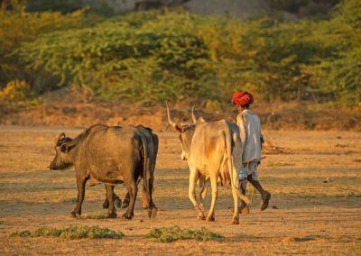kokoindia_rajasthan_horse_safaris (3)