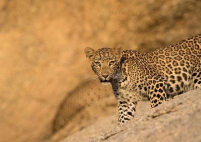 kokoindia_rajasthan_wildlifesafari (3)