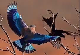 kokoindia_rajasthan_wildlifesafari (8)
